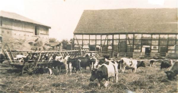 Rinder auf dem Vorwerkhof