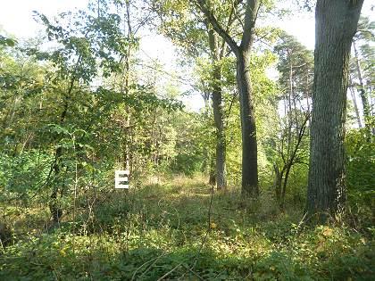 früherer Waldweg
